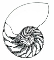 Sacred Geometry of the Nautilus Shell